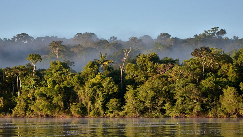 Forest at Teles Pires River - Photo by Rudimar Cipriani