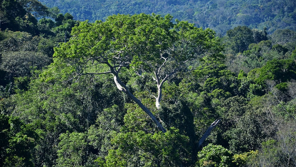 Conservation of Primary rainforests - Photo by Rudimar Cipriani