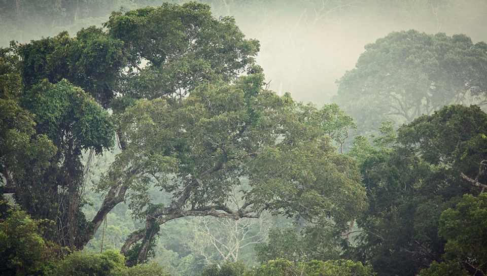 Protected forests at the Cristalino Private Reserve - Photo by Samuel Meilm