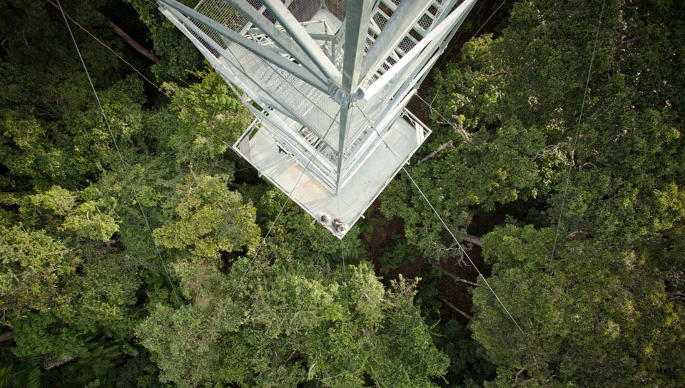 View from the Canopy Tower - Photo by Samuel Melim