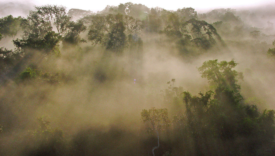 Morning brume at the Cristalino Forest Reserve - Photo by Will Carter