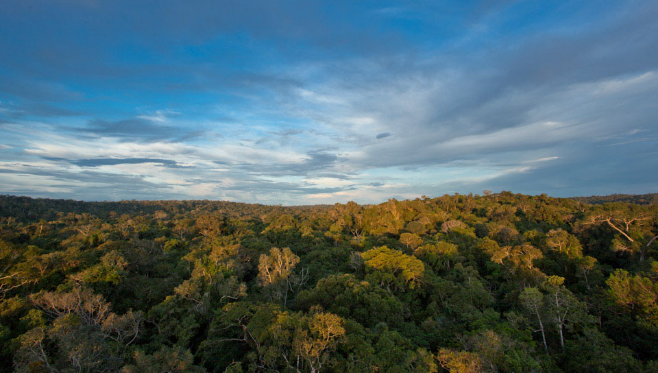 Panoramic view of the Cristalino Forest Reserve - Photo by Samuel Melim