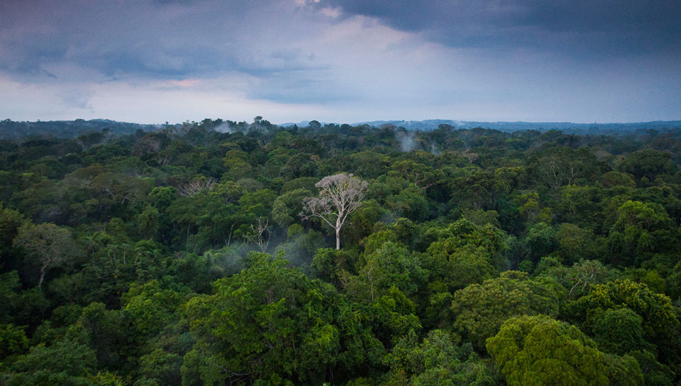 Forest view at the top of the canopy tower - Photo by João Marcos Rosa